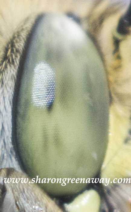 Guess what creature this eye belongs to?