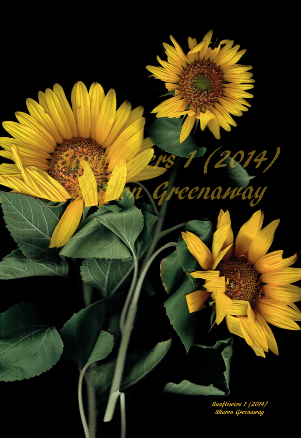 Sunflowers 1 Photogram