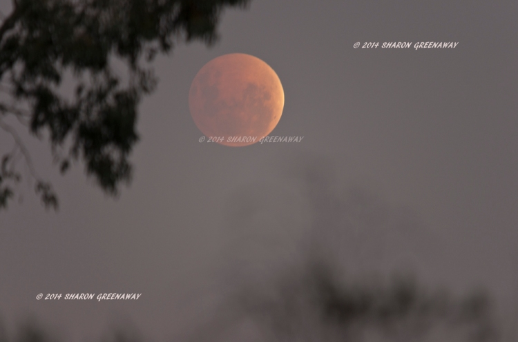 Moon eclipse from Central Victoria