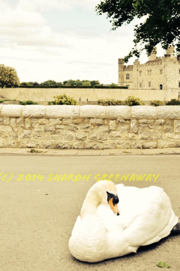 Picture postcard Leeds Castle