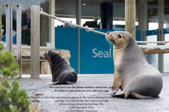 mum_sea_lion_and_pup