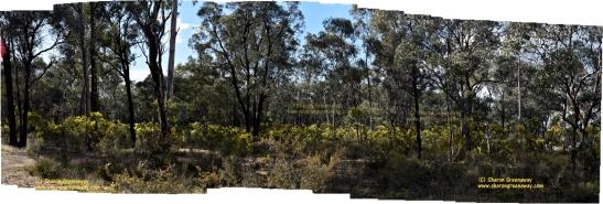 AUSTRALIAN FLORA BENDIGO