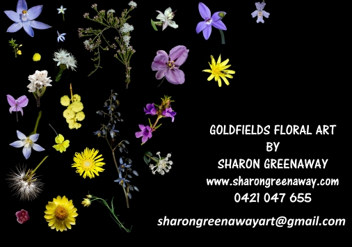 MAINLY TAKEN IN SITU THESE FLORAS ARE NATIVE TO AUSTRALIA AND MANY ARE NATIVE PARTICULARLY TO CENTRAL VICTORIA